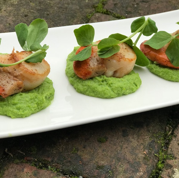 Scallops on a pea puree